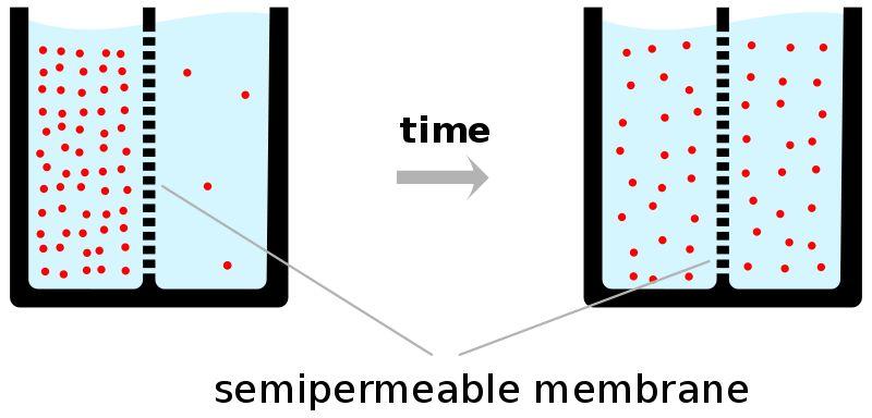 Exchange Across Plasma Membranes: Diffusion,... / A Pocket Merlin