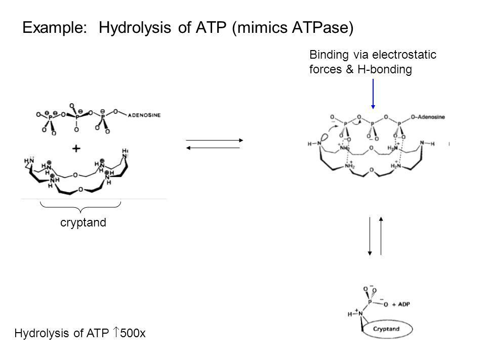 Enzyme Mimics (Artificial Enzymes) - ppt video online download