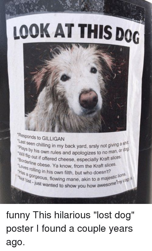 ✅ 25+ Best Memes About Lost Dog Posters   Lost Dog Posters Memes