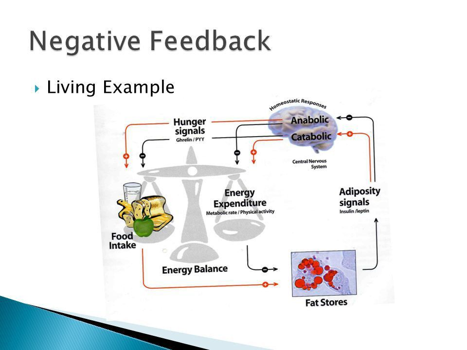 Homeostasis and Feedback in the Body - ppt video online download