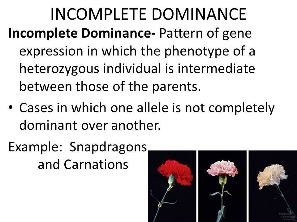 Incomplete Dominance, Codominance and Multiple Alleles. - ppt download