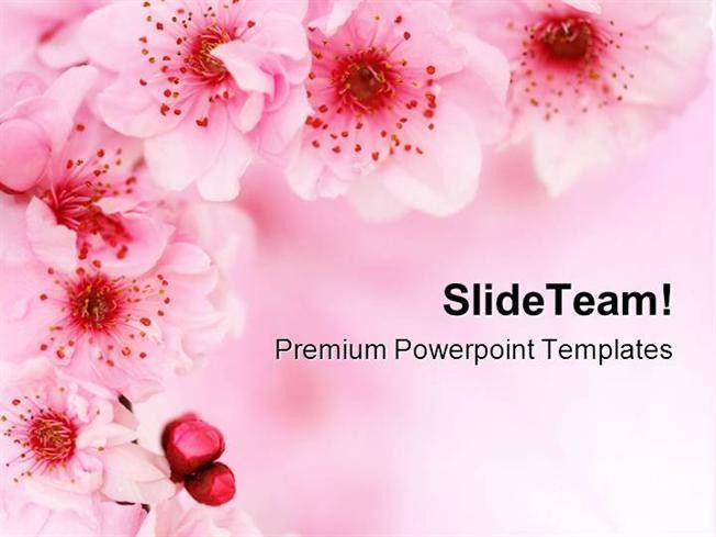 Spring Cherry Flowers Background Beauty Powerpoint Templates And P ...