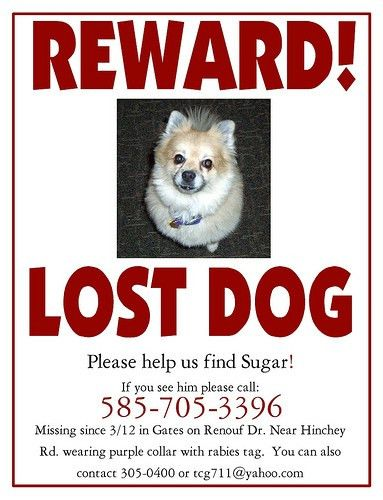 Lost Dog Flyer Template image information
