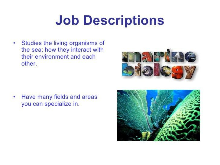 marine biology buzzlecom. interesting facts about marine ...
