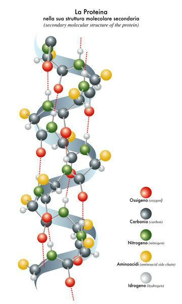 Protein Structure - Biology Encyclopedia - cells, body, examples ...