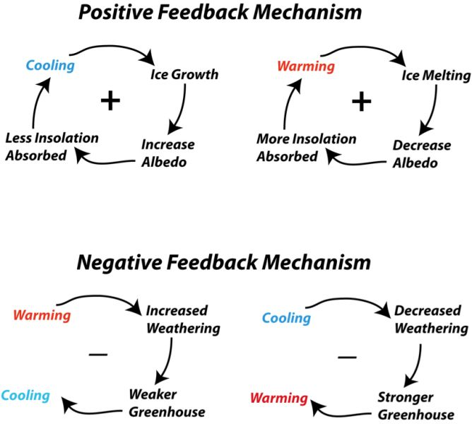 Schematic diagram representing some of the feedback mechanisms ...