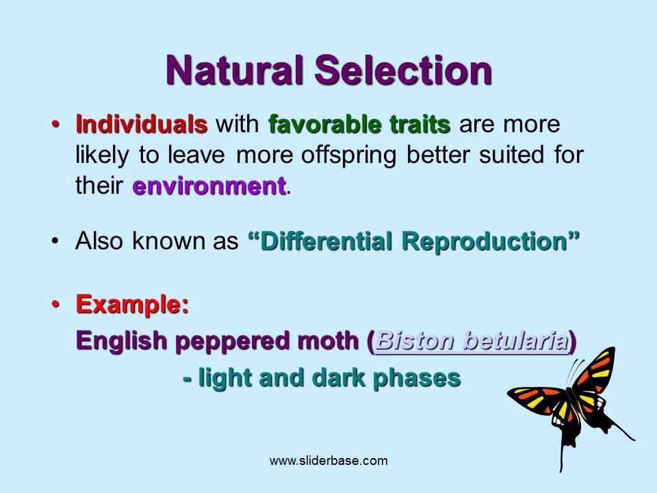 Natural selection - Presentation Evolution - SliderBase