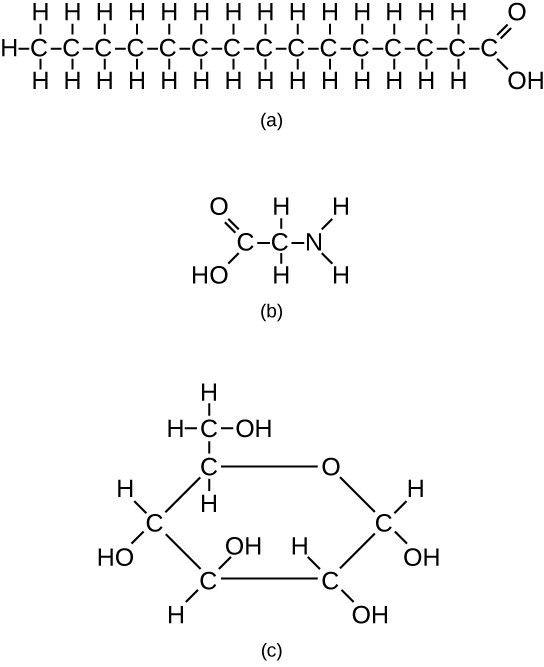 Biological Molecules | Biology I