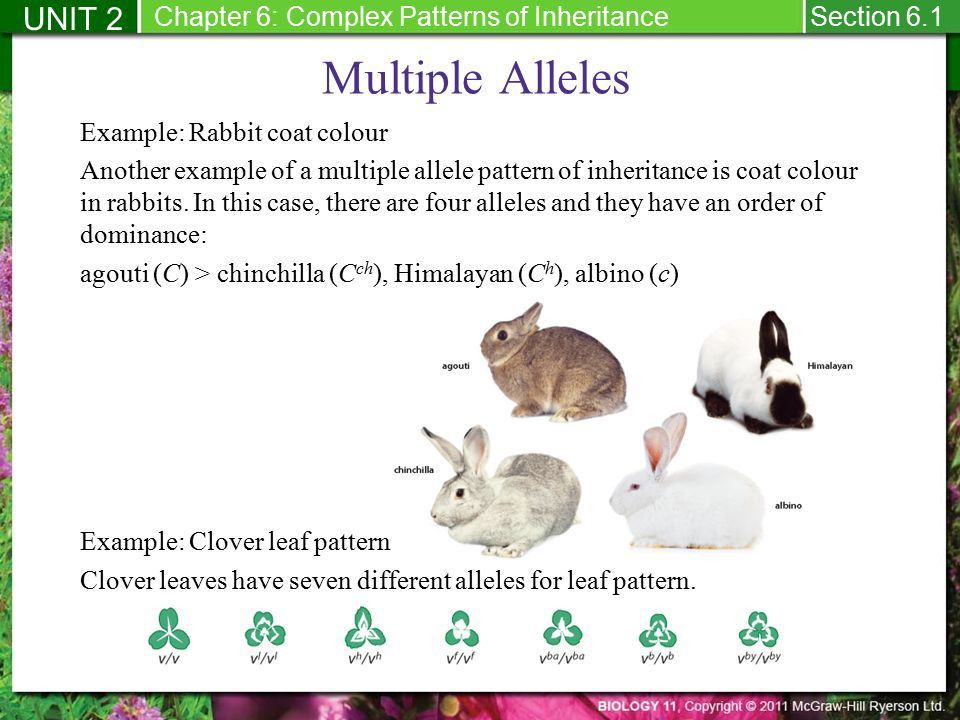 Presentation title slide - ppt download