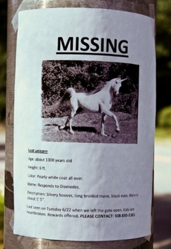 14 Lost Pet Posters That Are Kind of the Best - CollegeHumor Post