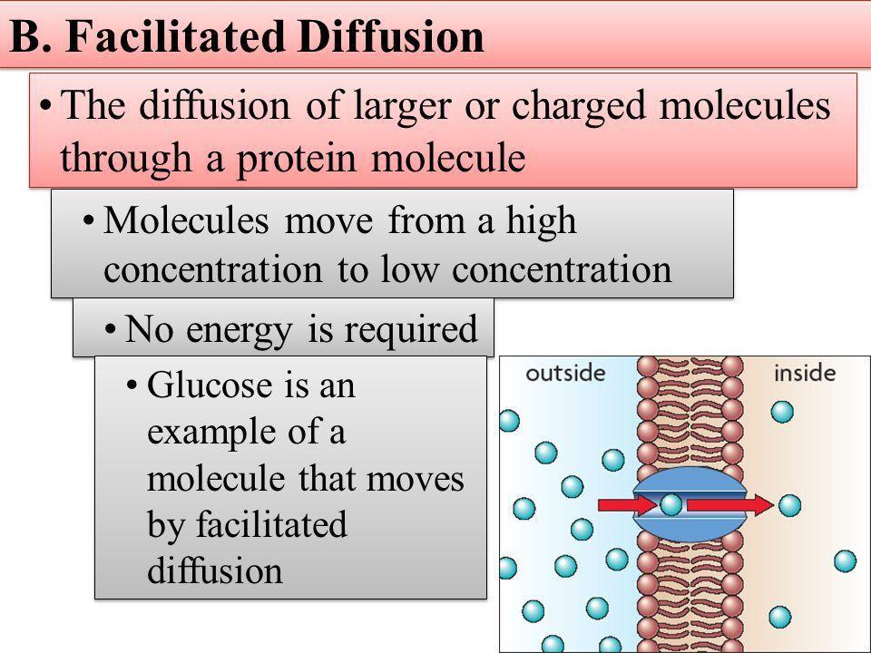 Warm Up – 11/11 Compare simple diffusion and facilitated diffusion ...
