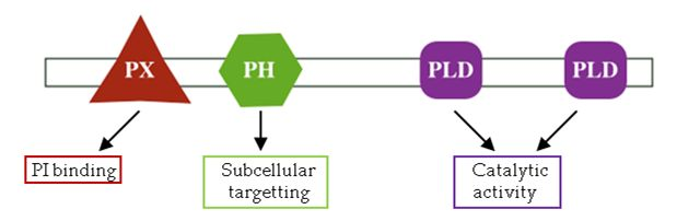 What are protein domains? | EMBL-EBI Train online