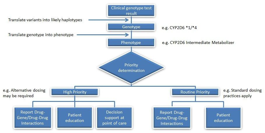 File:Intermediate Metabolizer Genotype to Reporting Process ...