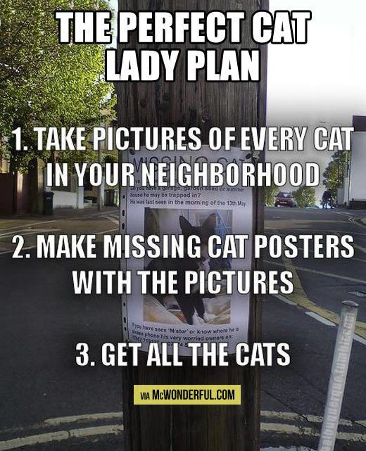 The perfect cat lady plan… | Cat lady, Missing cat poster and ...