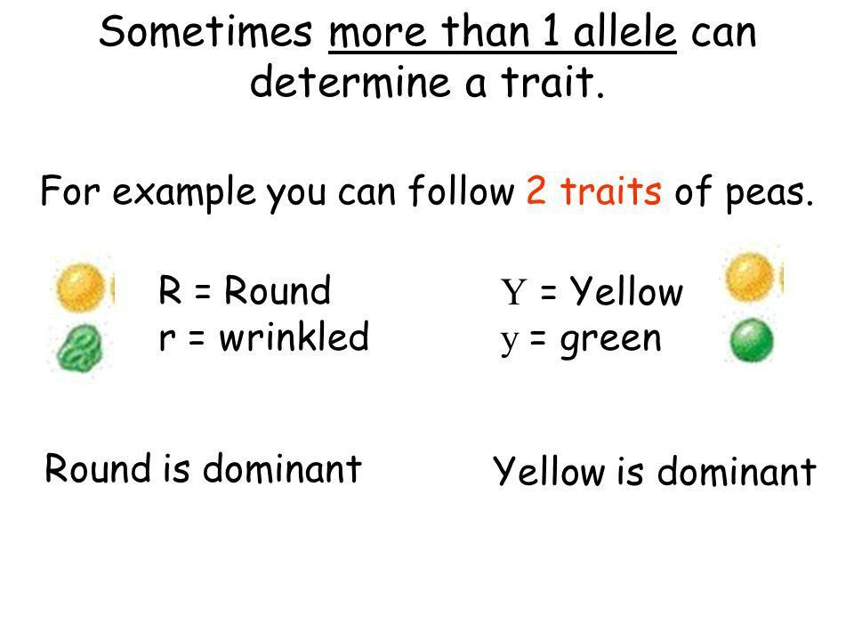 DIHYBRID CROSSES. Sometimes more than 1 allele can determine a ...