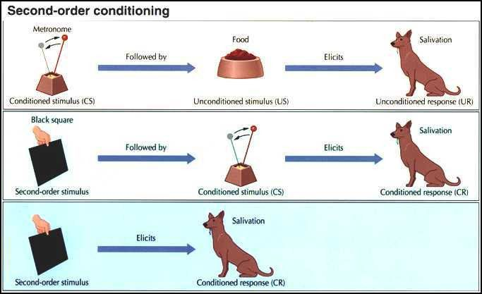 14. Summarize the components of classical conditioning ...