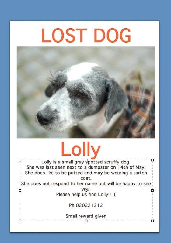 Lost dog poster maker | speciesworld.com