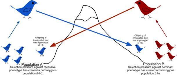Darwin was Right | Gene Flow