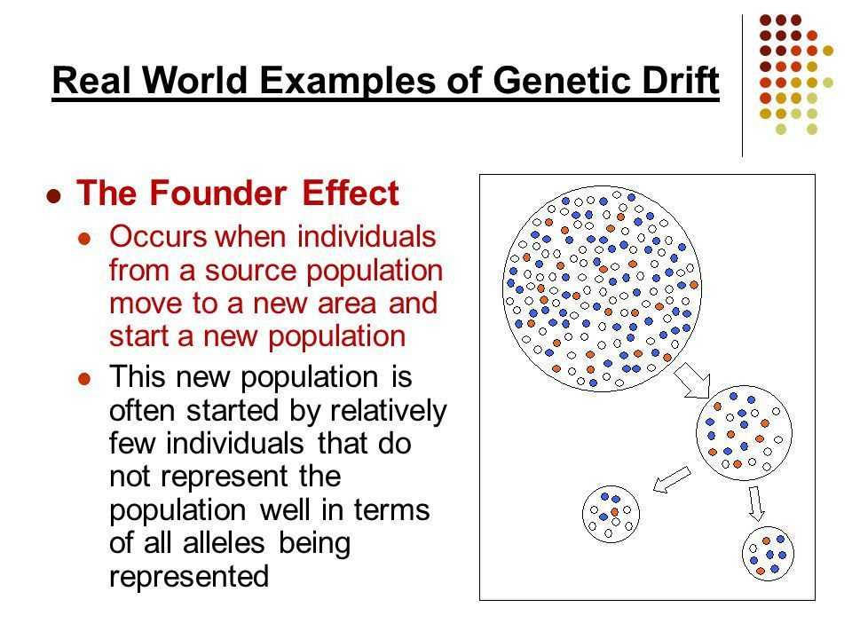genetic drift Genetic drift is one of four factors (mutation, migration, genetic drift, and natural selection) causing gene pools to change over time, and genetic drift is at the heart of several recent theories of evolution.