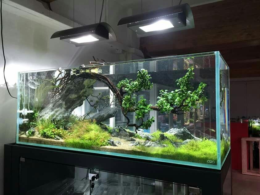 1000 Images About Aquarium Fish Tank Aquascape Aquascaping On Pinterest Aquascaping