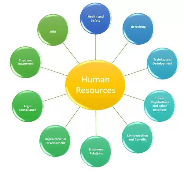 What is the role of a HR in a company? - Quora