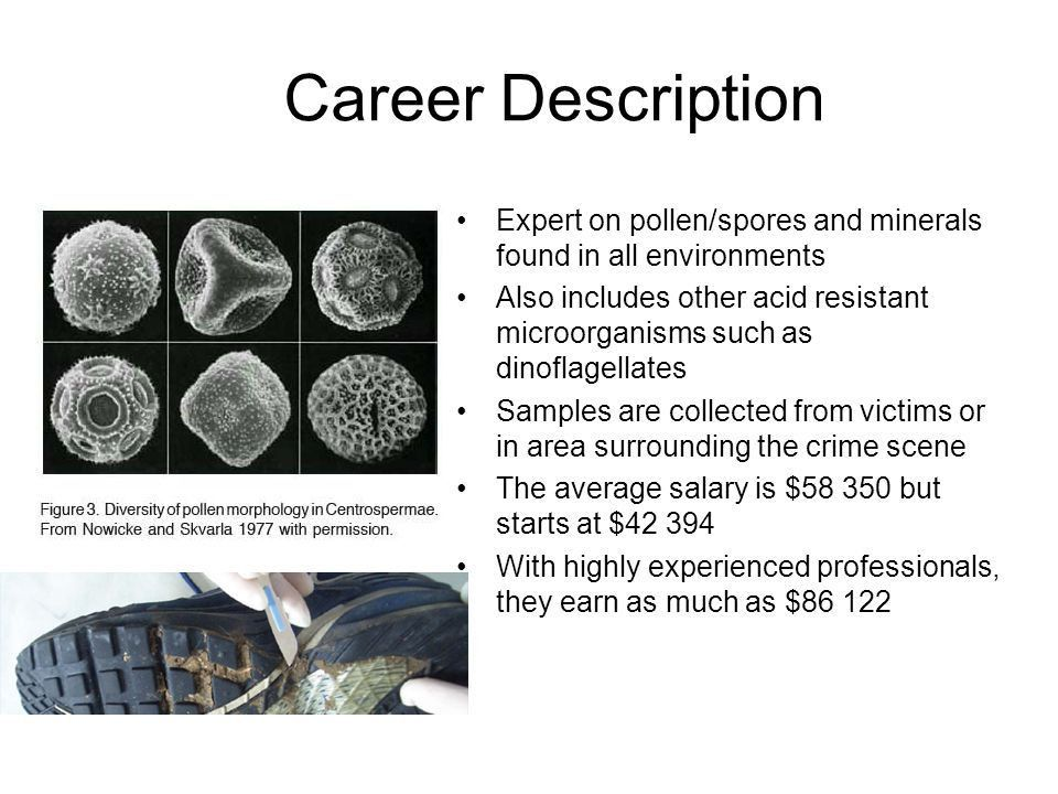 Forensic Palynologist - ppt download