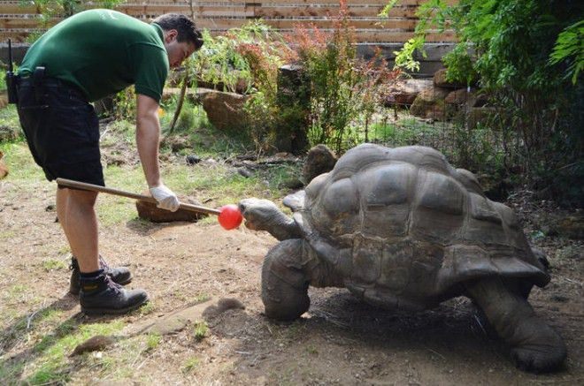 How to entertain a giant... | Zoological Society of London (ZSL)
