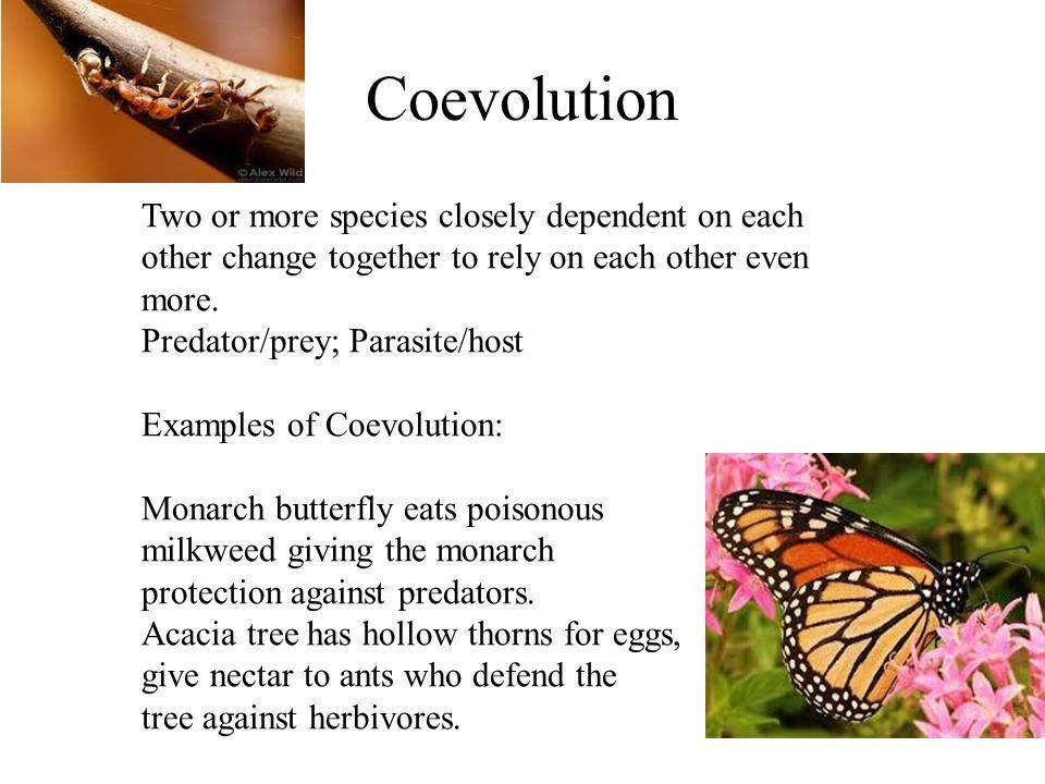 EVOLUTION natural selection UNIT 9 BIOLOGY. Fossils CAST MOLD ...