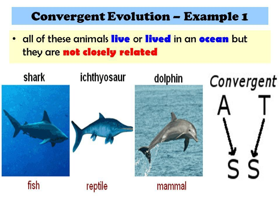 15.3 Mechanisms of EVOLUTION - ppt video online download