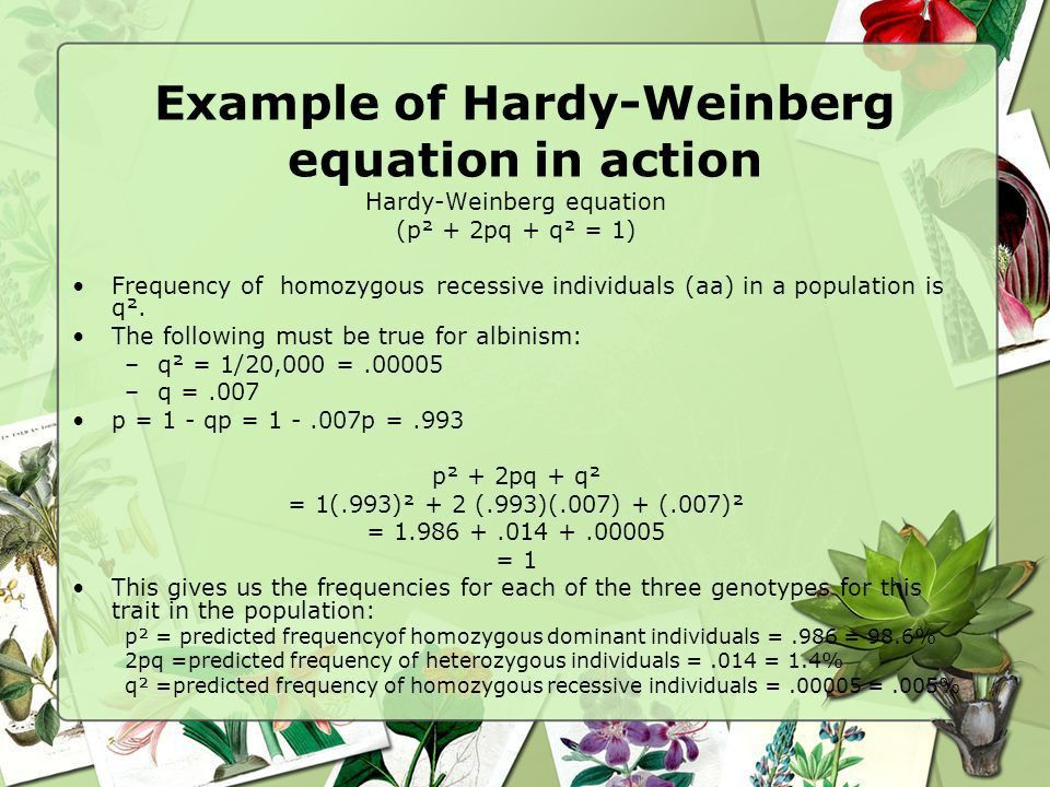 How To Use The Hardy Weinberg Equation - Jennarocca