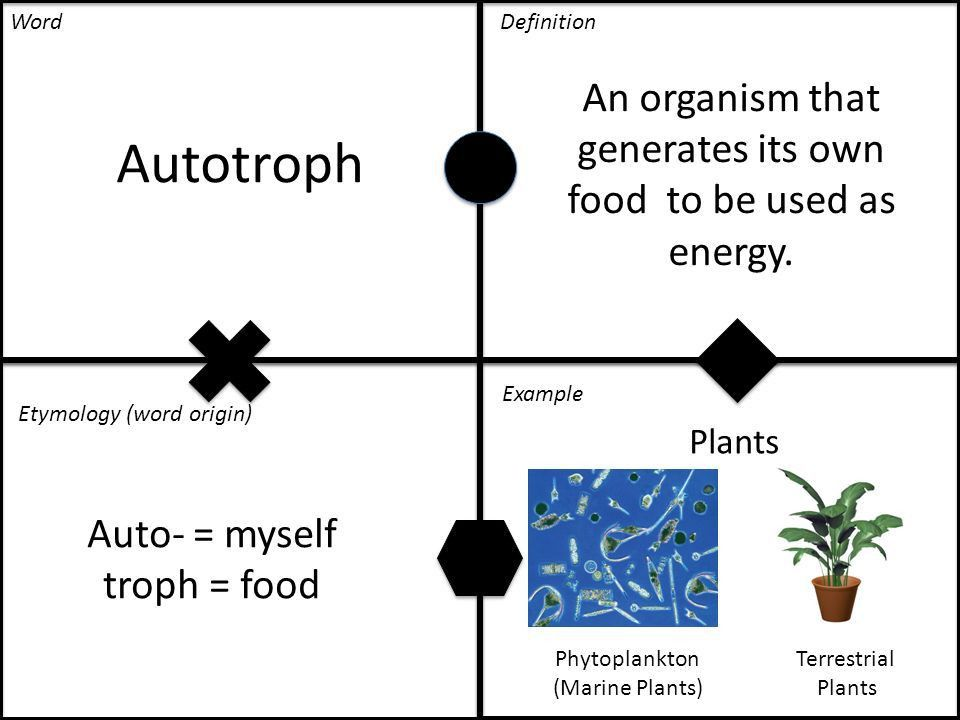 Autotroph An organism that generates its own food to be used as ...
