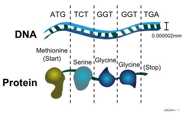 Designing of Nanotools – Protein Enhancements with Genetic ...