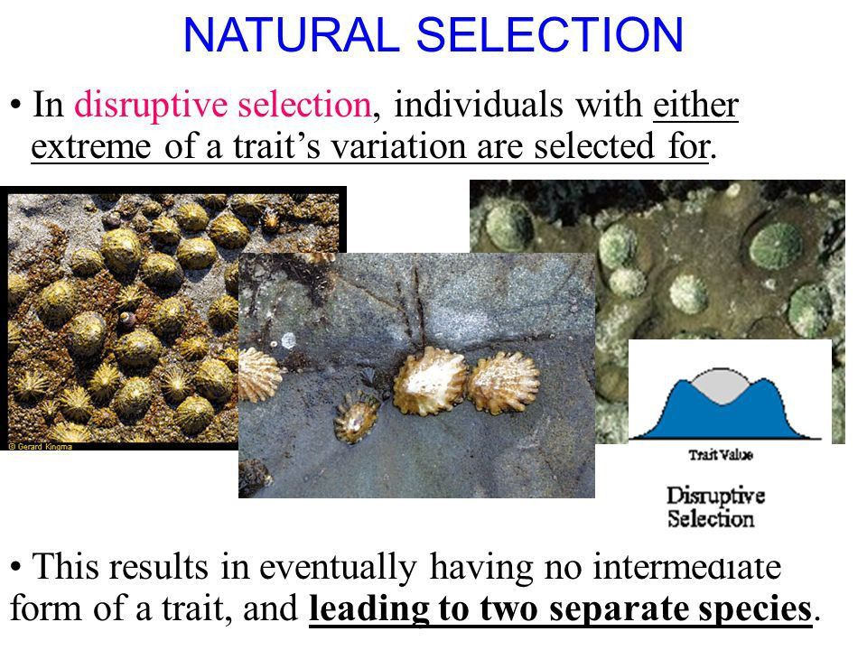 2.1 Section Objectives – page 35 Identify how natural selection ...