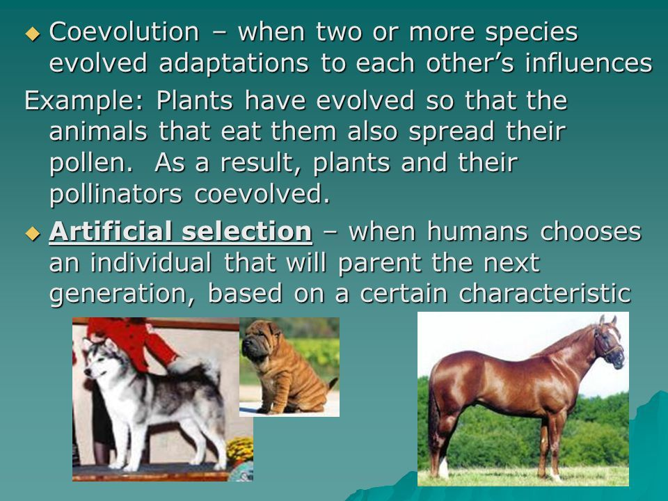 The Theory of Evolution - ppt video online download