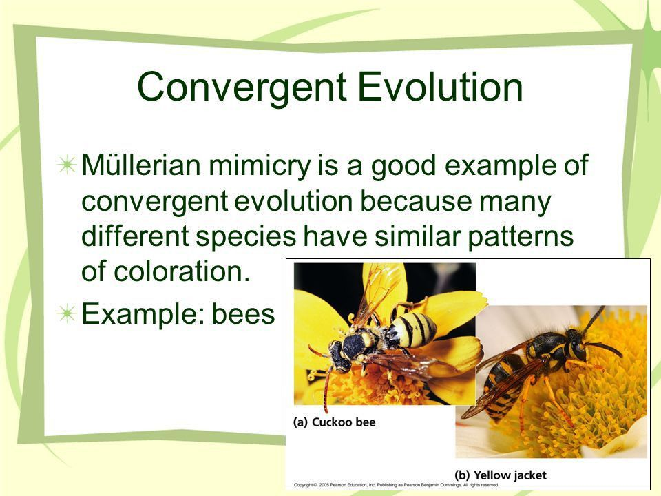 Chapter 53 Community Ecology. - ppt video online download