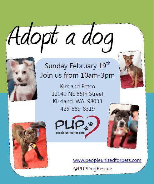 PUP Dog Rescue Flyers – Portfolio: Michelle Fears