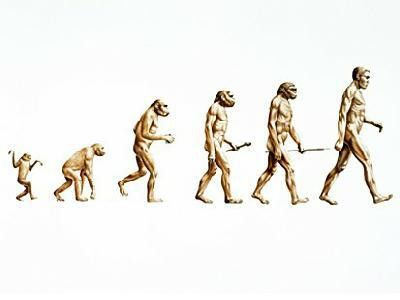 PopSciColl: Natural Selection - The mechanism of evolution