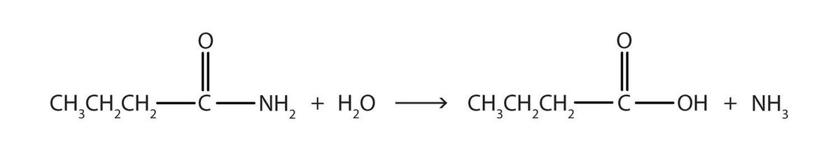 Chemical Properties of Amides: Hydrolysis