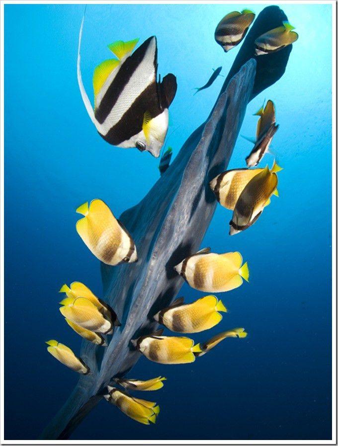 Symbiosis - example of Underwater Photography | Animals: Wonders ...