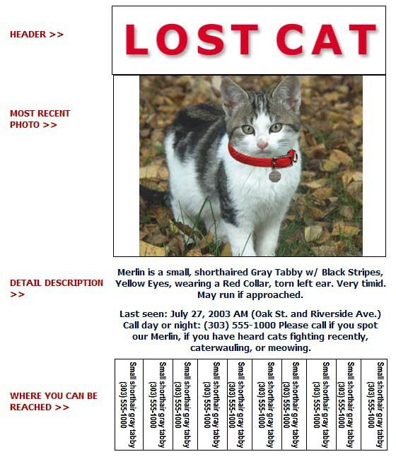 Lost and Found Cat Flyer - Humane Society of Broward CountyHumane ...