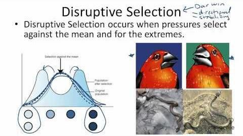 Type of Selection: Disruptive, Directional, Stabilizing, and ...