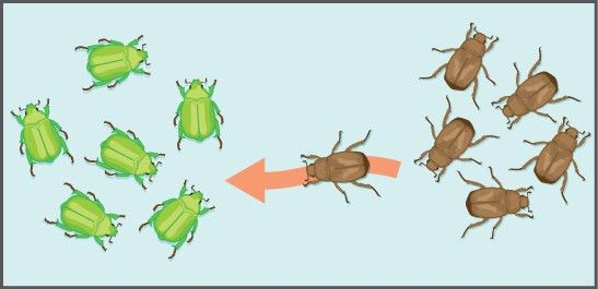 Population Genetics | Boundless Biology