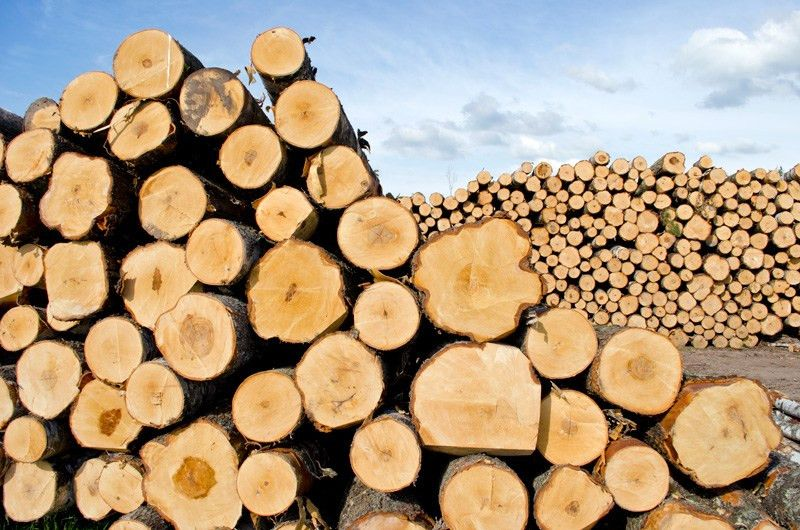 20 per cent tariff countervailing duty on Canadian softwood lumber ...