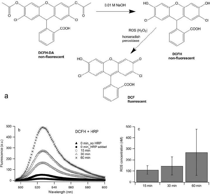 a) Hydrolysis of DCFH-DA and ROS-induced oxidation of DCF H ; (b ...