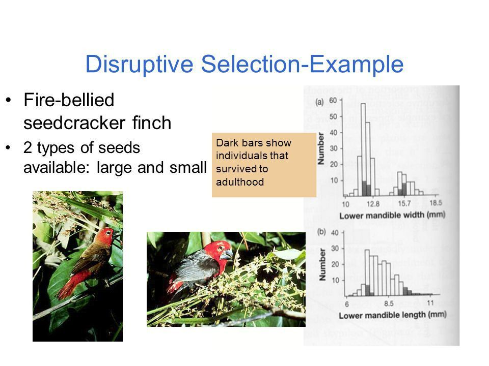 Evolution by Natural Selection as a Syllogism - ppt download