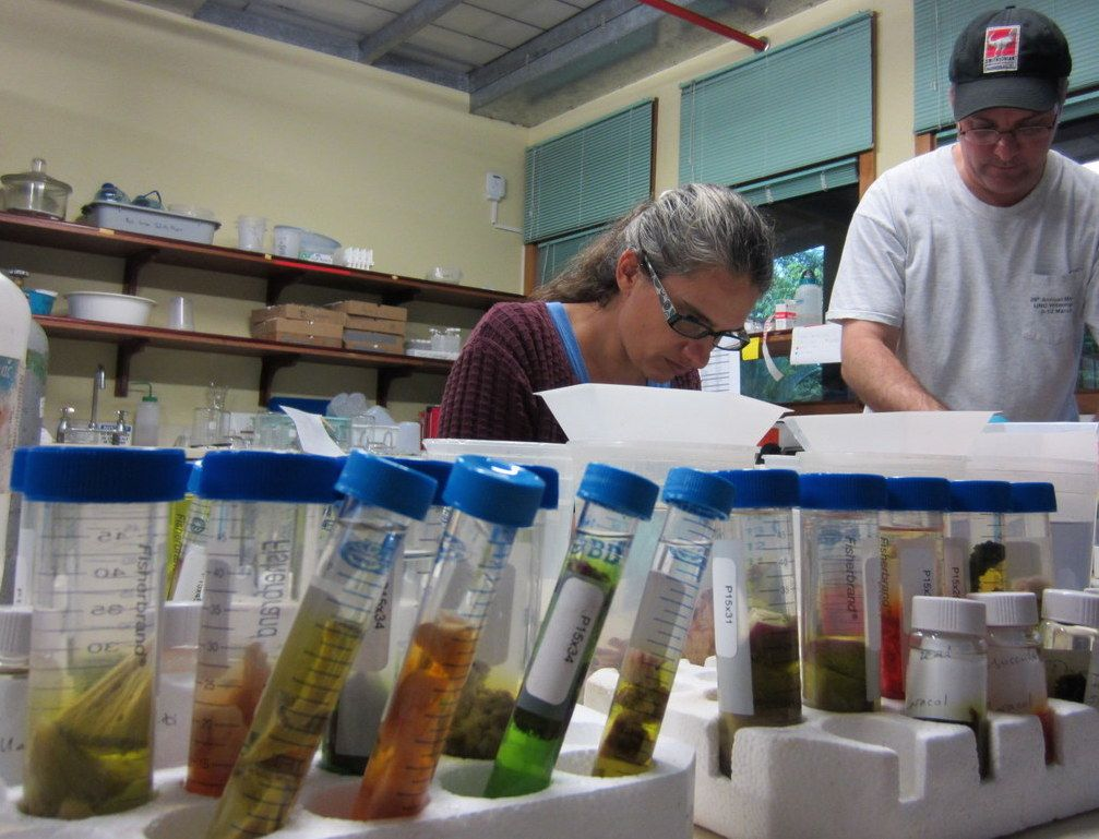 National Museum of Natural History Unearthed: Invertebrate Zoology