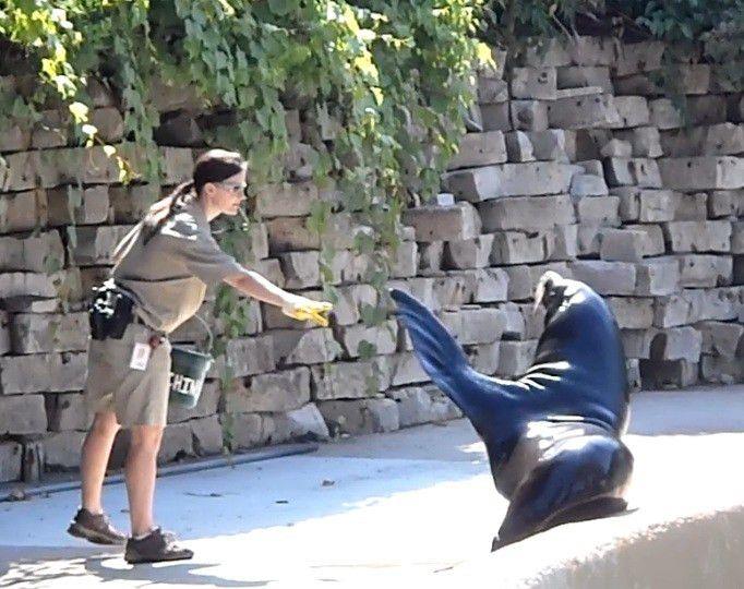 Zookeeper | Zookeeping 101