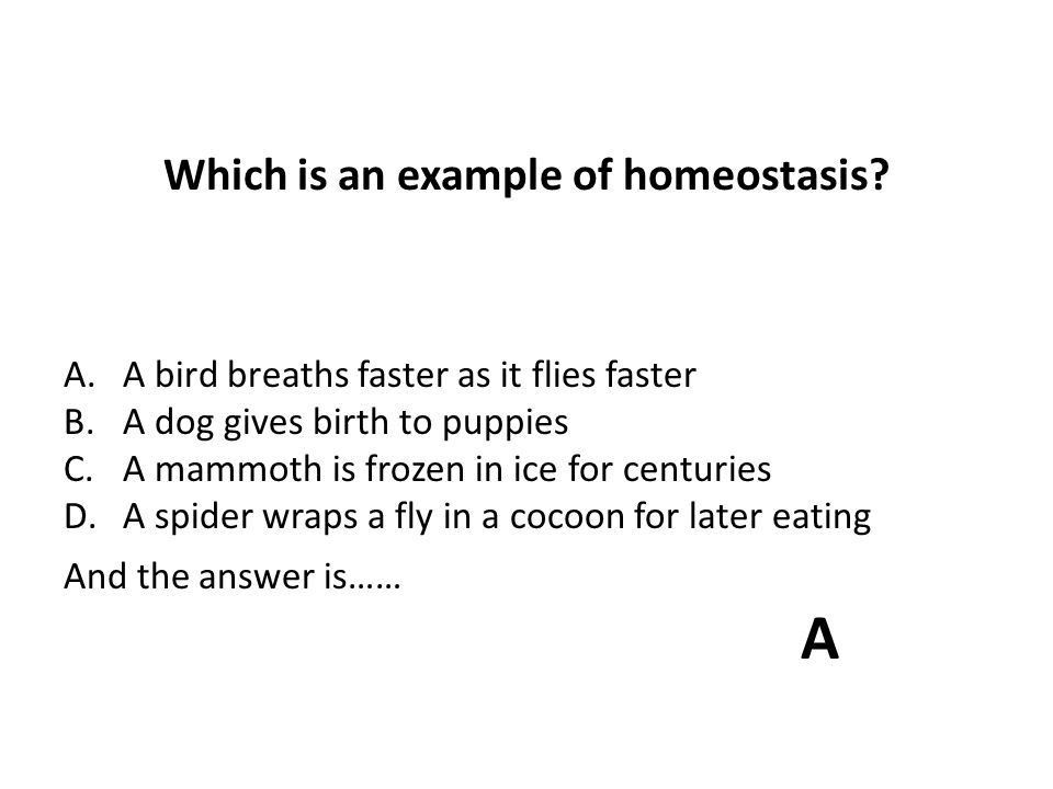 Which is an example of homeostasis? - ppt download
