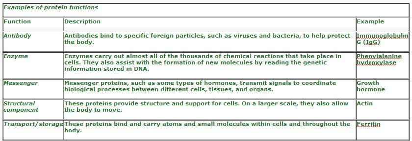 Amino Acids and Proteins | biochemist01