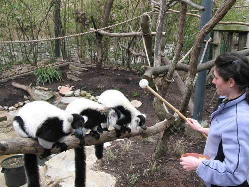 zooworldblog | The training and time spent in order to become a ...